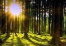 Odborníci letos vysadí v lesích 85 milionů nových stromků. Je to rekordní číslo